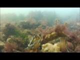 Fragmenten zeelandweekend september 2012